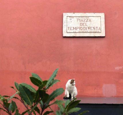 gatta al tempio di vesta