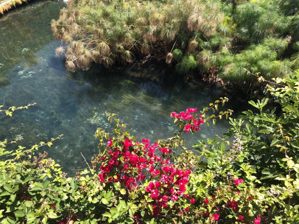 piante di papiro nella fonte aretusa