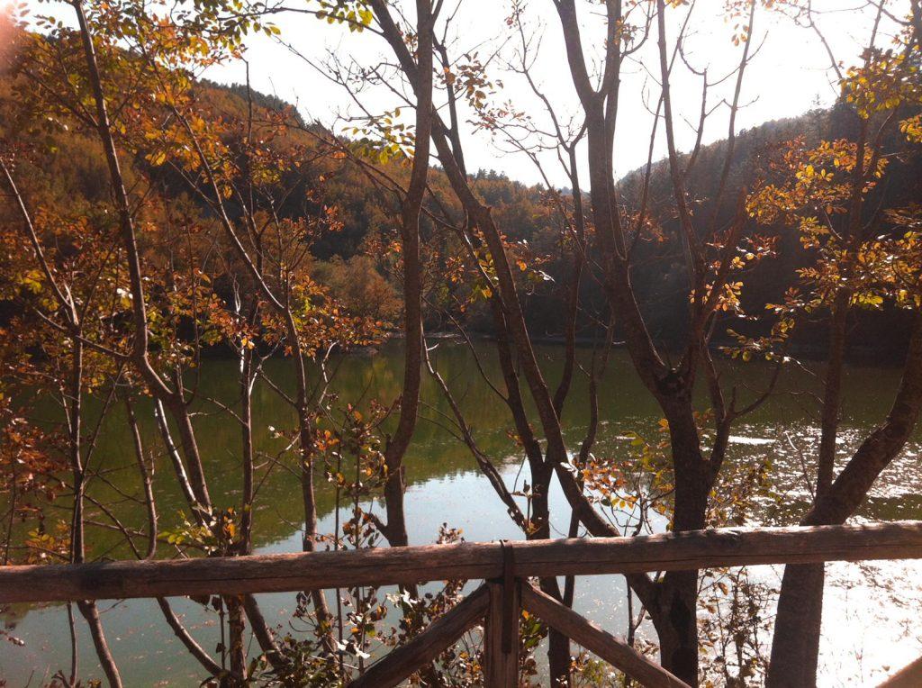 alberi sul lago di Boccafornace